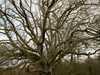 Strom_2 Veľká Británia/Velka Britania