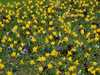 Zaplava kvetov Veľká Británia/Velka Britania