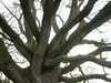Strom_3 Veľká Británia/Velka Britania