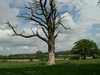 Strom Veľká Británia/Velka Britania