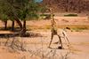 Hoanib Rivier - Autor fotografie: Julo Nagy/Foto Safari Namíbia 2008