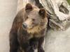 Medveď Zoo Bojnice