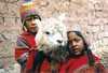 Chlapci s lamou Peru
