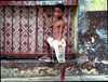 V chudobnej štvrti Panama