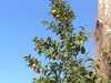 Pomarance aj vo februari Alžírsko/Alzirsko
