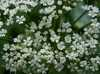Kvetinky Trnava