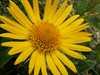 Kvet 3 Západné Tatry (horstvo)/Zapadne Tatry (horstvo)